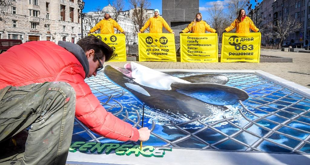 Last month Greenpeace activists produced an image of an orca in Moscow in protest against keeping orcas and beluga whales crammed into small enclosures in the Far Eastern town of Nakhodka (AFP Photo/Yuri KADOBNOV)