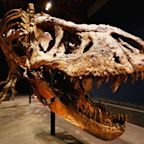 Someone is selling a baby T. rex skeleton for $2.95M on eBay and paleontologists aren't happy