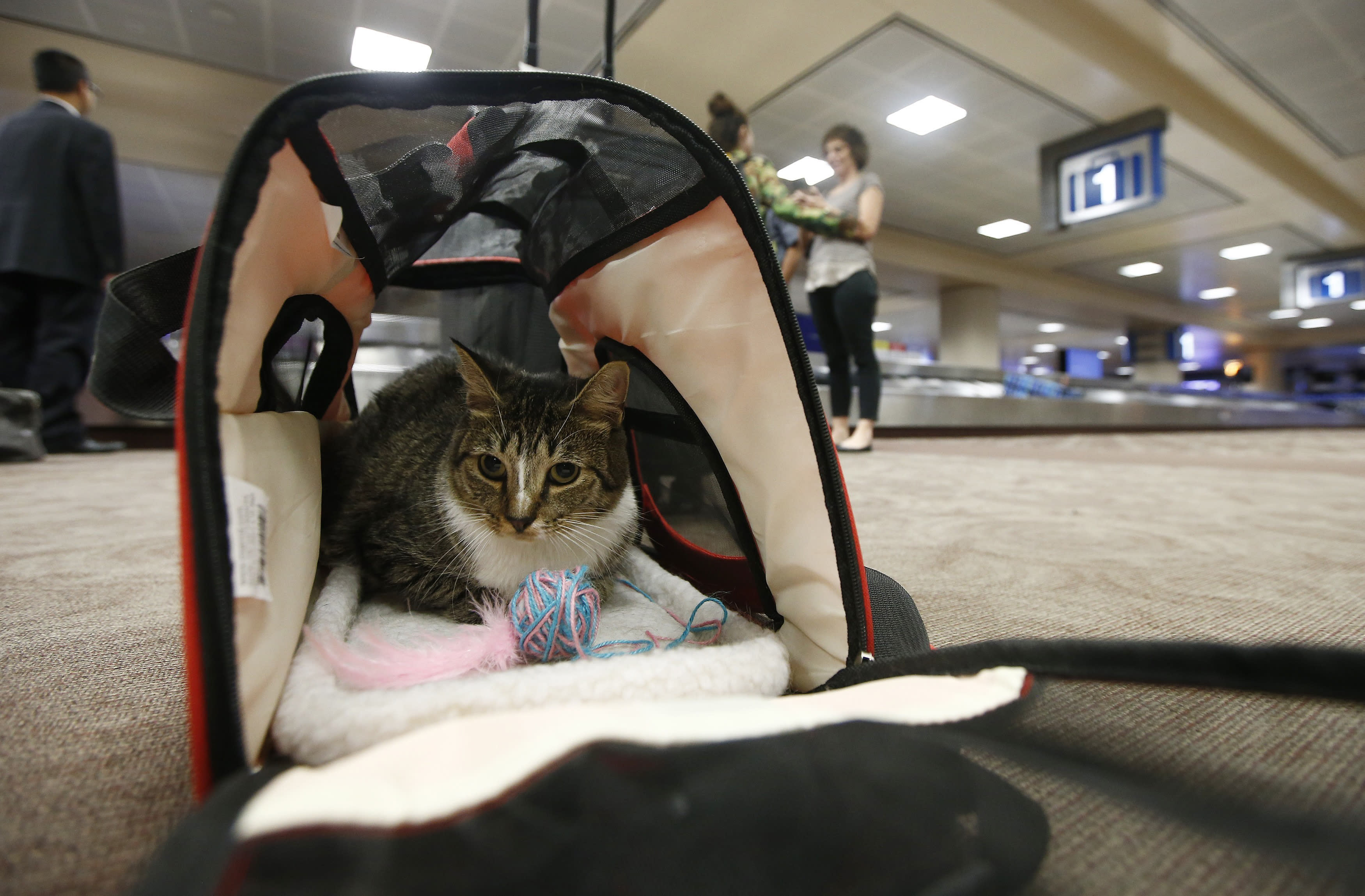 DOT Proposes Banning 'Emotional Support Animals' on Airplanes