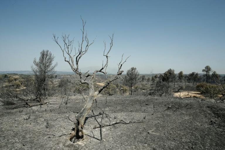Spain's weather agency said temperatures on Saturday would exceed 36 degrees Celsius (97 degrees Fahrenheit) (AFP Photo/PAU BARRENA)
