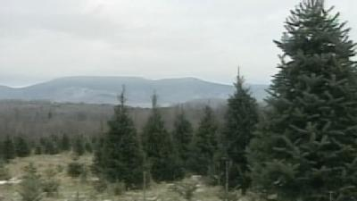 Christmas Trees Running Out In Vermont