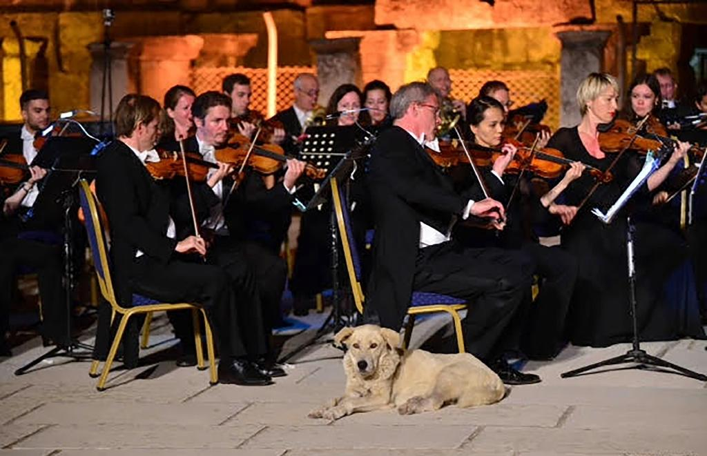 A picture taken and released by the Istanbul Foundation for Culture and Arts (IKSEV) shows a dog sitting next to the orchestra's musicians during a concert at the Ancient Ephesus, in Izmir, on June 30, 201
