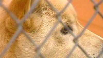 Humane Society: No More Strays Until Bill's Paid