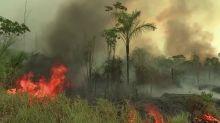 Fires in Brazil's Amazon jump 20% in June
