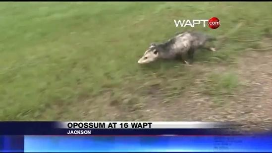 16 WAPT has unexpected visitor