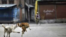 After Kids, Now Adults Attacked by Feral Dogs in Sitapur