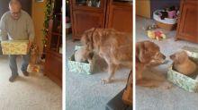 ¡Ternura! Perro recibe un emotivo regalo de Navidad