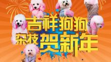 Dog circus show at Resorts World Sentosa cancelled after taking online flak