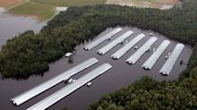 Florence hammers North Carolina agriculture – losses include 1.7 million drowned chickens