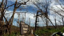 População de insetos foi dizimada em floresta porto-riquenha, diz estudo