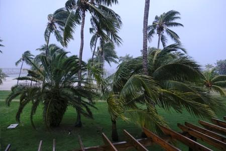 Palm trees blow in the wind during the arrival of Hurricane Dorian in Marsh Harbour