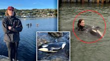 'A hero': Kiwi teen's remarkable bond with rescued orca