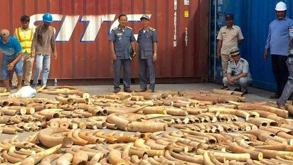 Cambodia seizes record 3-tonne haul of African ivory