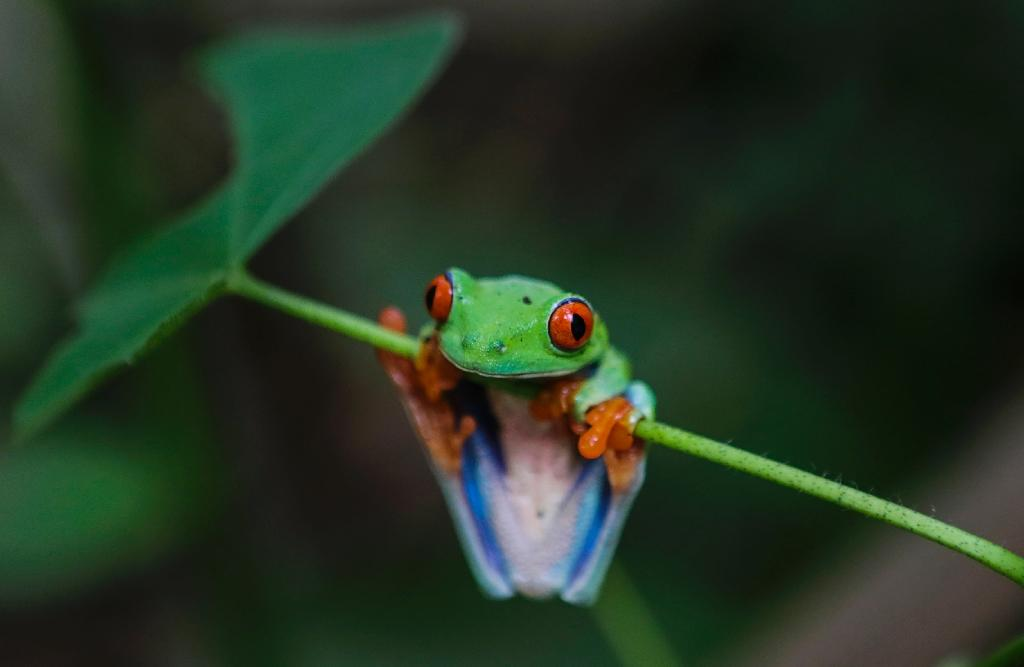 As many as 10 types of frogs are believed to have survived the mass extinction some 66 million years ago, which erased three-quarters of life on Earth, said the report (AFP Photo/INTI OCON)