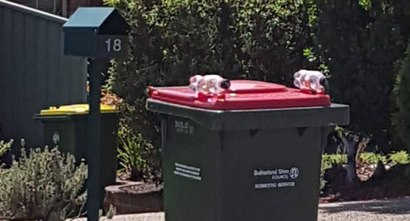 Person puts bottles on bin to stop birds lifting lid
