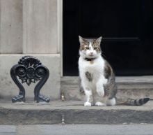 Officer, please let this patient and rather important cat into 10 Downing Street
