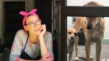 Cachorros de Paola Carosella comem bolo de fubá, levam bronca e viram meme