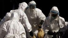 India alerta de casos de gripe aviar en el país y empieza a sacrificar a miles de aves