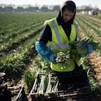 UK to 'end reliance on cheap labour' with new immigration system