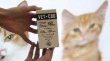 Pot for pets: U.S. federal law puts vets into a quandary