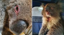 How being trapped in a horrific bushfire saved this koala's life