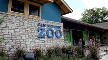 More Roar: San Antonio Zoo plans historic transformation