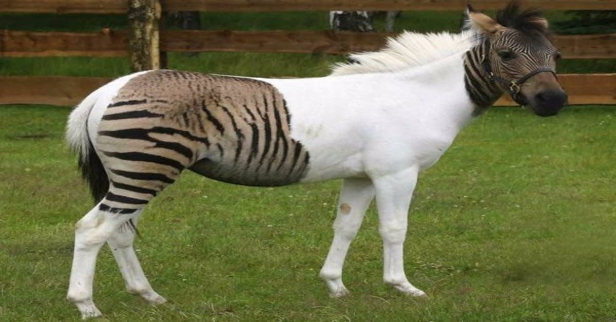12 Most Bizarre Animal Hybrids. Jaw Dropping