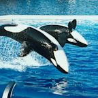 SeaWorld Makes a Splash After Getting the Thumbs-Up to Reopen June 11