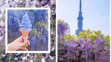 2018 賞花攻略:去東京除了賞櫻,其實浪漫唯美的紫藤花也絕不能錯過