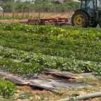 42 more crops eligible for coronavirus relief program, says USDA
