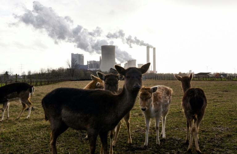 Pandemic caused 'unprecedented' emissions drop: study
