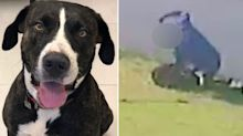 Man banned from owning pet over dog punching video