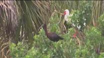 Sarasota County bird habitat is subject of discussion after couple sends fireworks at it