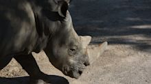 A 2-Year-Old Girl Was Hospitalized After Falling Into a Rhinoceros Yard at a Florida Zoo