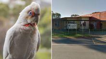 'Bleeding mouths': Children 'very upset' as birds fall from sky outside Adelaide school