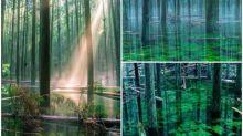 【有片】日本「幻影池塘」七年一遇 不可思議秘景Twitter熱傳