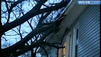 Tree falls on Webster home