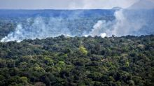 Brazil offers to cut deforestation by 40 percent in exchange for $1 billion from U.S.