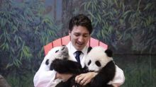 Justin Trudeau's Panda Cub Cuddle Has Been Recreated... In Butter