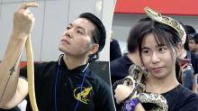 Schönheitswettbewerb der Schlangen
