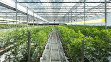 Why Marijuana Stock Innovative Industrial (IIPR) Fell 15% in July