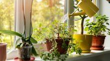Deine Pflanzen gehen ein? Mit diesem Trick werden sie wieder lebendig