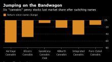 Penny Stocks Foray Into Cannabis Fails to Catch Investor Fever