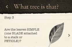 Arbor Day tree guide provides step-by-step tree identification