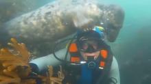 Un `encuentro juguetón´ bajo profundidades marinas