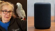 Parrot befriends Amazon Alexa and 'goes on shopping spree'