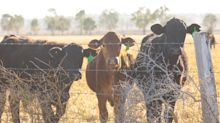 Why animals are a crucial part of the Australian economy
