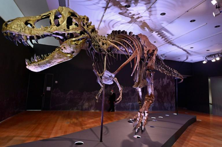 40-foot T-rex Skeleton Could Set Record Price at New York Auction