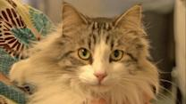 Conrad the cat needs a new home