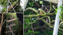 Welsh town rescues cat stuck up tree after three-day operation